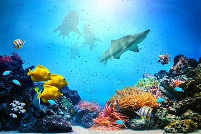 https://imgc.allpostersimages.com/img/posters/underwater-scene_u-L-Q1033FG0.jpg?p=0