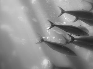 Underwater World 32
