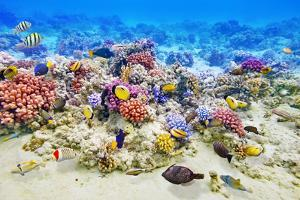 Underwater World with Corals and Tropical Fish. by Brian K