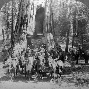Cavalry Passing Through the Great Tree 'California, California, Usa by Underwood & Underwood