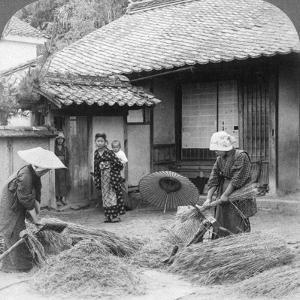 Farmers Wives at Work, Iwakuni, Japan, 1904 by Underwood & Underwood