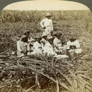 On 'La Union' Sugar Plantation, San Luis, Santiago Province, Cuba, 1899 by Underwood & Underwood