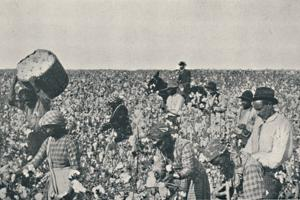 'Picking Cotton', 1916 by Underwood & Underwood