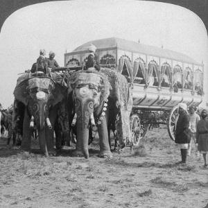 Richly Adorned Elephants and Carriage of the Maharaja of Rewa at the Delhi Durbar, India, 1903 by Underwood & Underwood