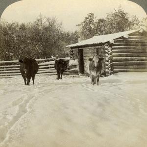 Winter on a Ranch, Montana, Usa by Underwood & Underwood