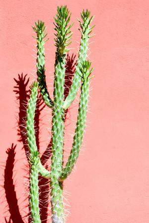 Photo Picture of a Tropical Cactus Texture Background by underworld