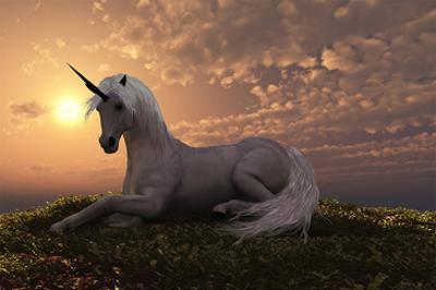 Unicorn on Hilly Sunset Knoll