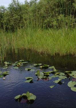United States, Everglades National Park, Florida