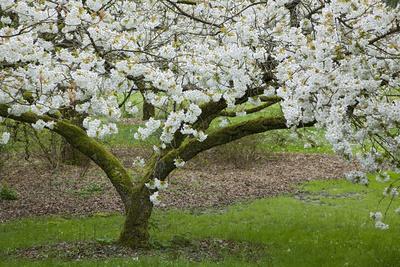 https://imgc.allpostersimages.com/img/posters/university-of-washington-botanic-garden-seattle-washington-usa_u-L-PN722T0.jpg?p=0