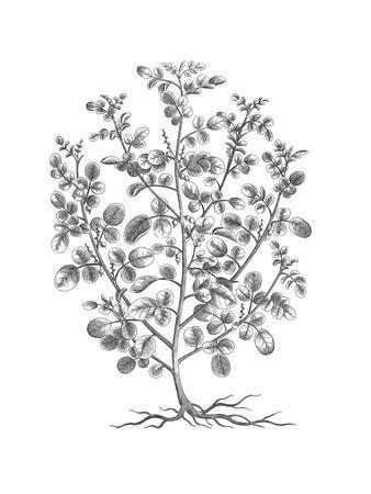 B&W Plant Specimen I