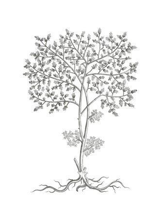 B&W Plant Specimen IV