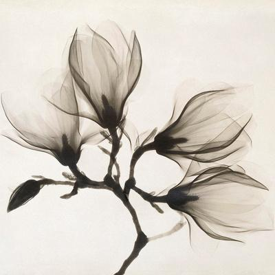 Branch with Four Magnolias, 1910-1925
