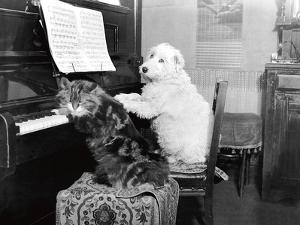 Cat and Dog Playing Piano by Unknown