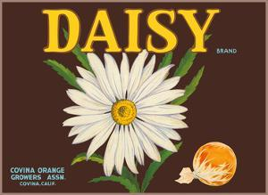 Daisy Brand Oranges by Unknown