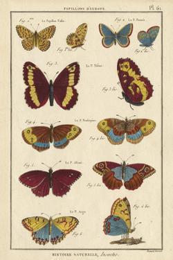 Histoire Naturelle Butterflies IV by Unknown