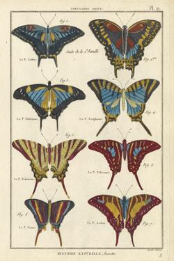 Histoire Naturelle Butterflies VI by Unknown