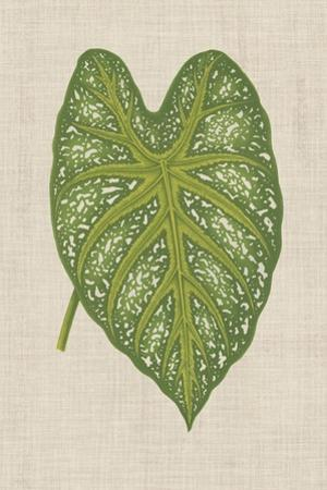 Leaves on Linen I by Unknown