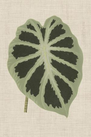 Leaves on Linen II by Unknown