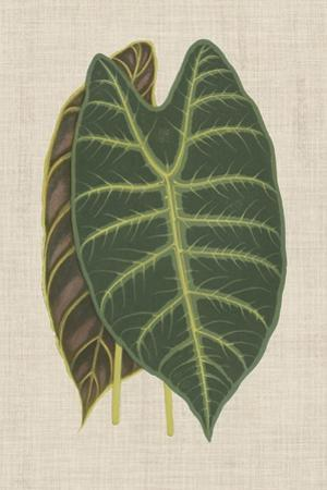 Leaves on Linen III by Unknown