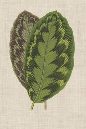 Leaves on Linen IV by Unknown