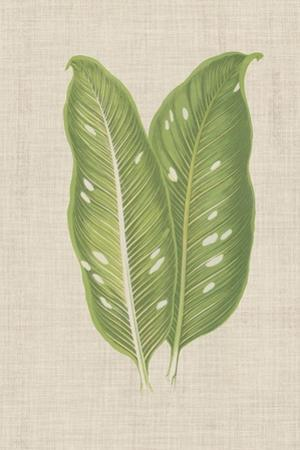 Leaves on Linen V by Unknown