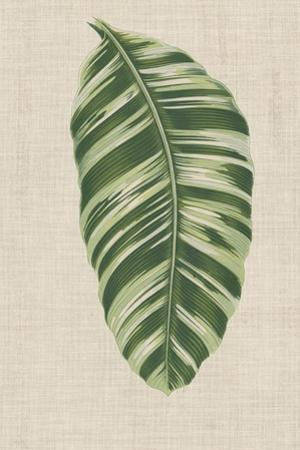 Leaves on Linen VI by Unknown