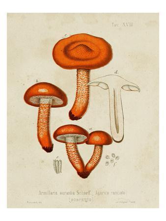 Mushroom Varieties IV