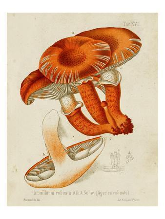 Mushroom Varieties VII