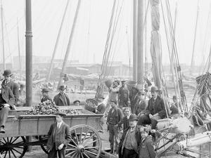 Unloading Oyster Luggers, Baltimore, Md.