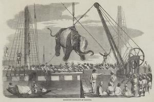Unshipping Elephants at Calcutta
