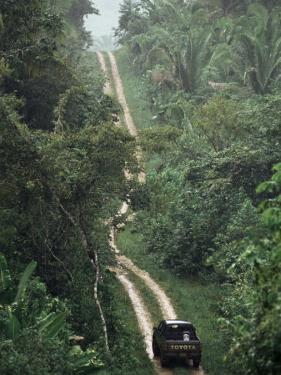 Driving in the Rain Forest, Lubaantun, Toledo District, Belize, Central America by Upperhall