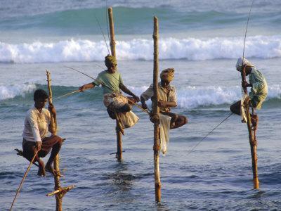Stilt Fishermen, Weligama, Sri Lanka, Asia