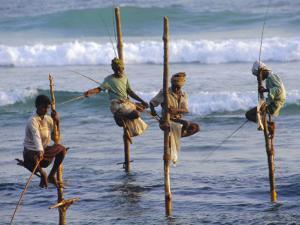 Stilt Fishermen, Weligama, Sri Lanka, Asia by Upperhall Ltd