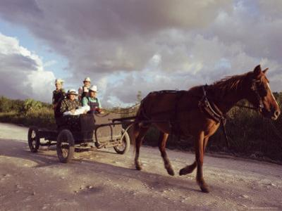 Traditional Mennonite Family with Pony and Trap, Camp 9, Shipyard, Belize, Central America by Upperhall Ltd