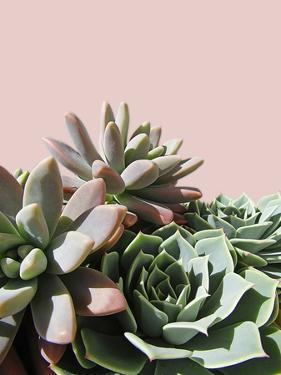 Pink Green Succulents by Urban Epiphany