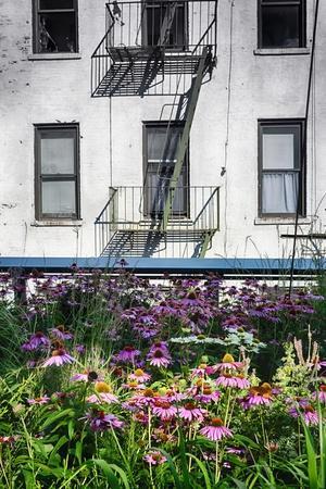 https://imgc.allpostersimages.com/img/posters/urban-meadow-of-manhattan-new-york-city_u-L-Q1ASF310.jpg?p=0