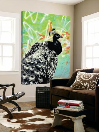 Peacock by Urban Soule