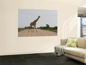 Giraffe Crossing the Road by Uros Ravbar