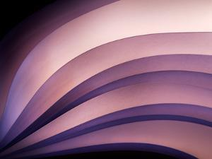 A Fan of Purple by Ursula Abresch