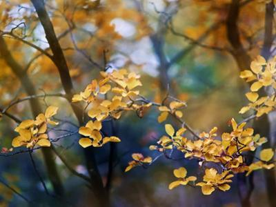 Autumn Leaves by Ursula Abresch