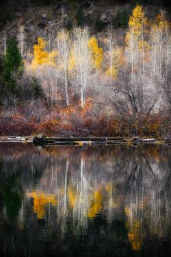 Autumn Reflection by Ursula Abresch