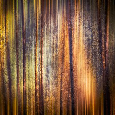 Autumn Walk by Ursula Abresch