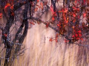 Autumnal by Ursula Abresch