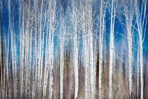 Birches in Spring by Ursula Abresch