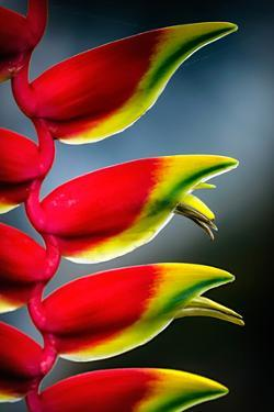 Birds of Paradise by Ursula Abresch