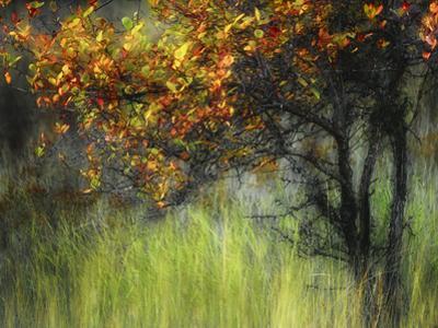 Bittersweet by Ursula Abresch