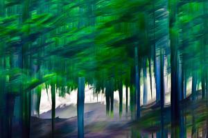 Cedars in Summer by Ursula Abresch