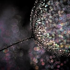 Chandelier by Ursula Abresch