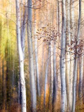 Come Walk with Me by Ursula Abresch