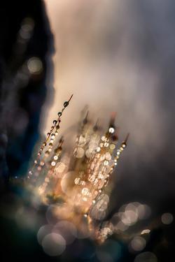 Dazzle by Ursula Abresch